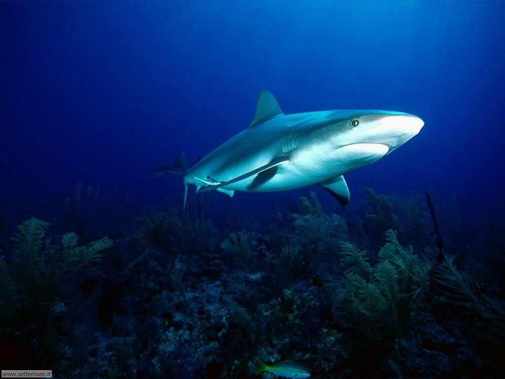 squali 1