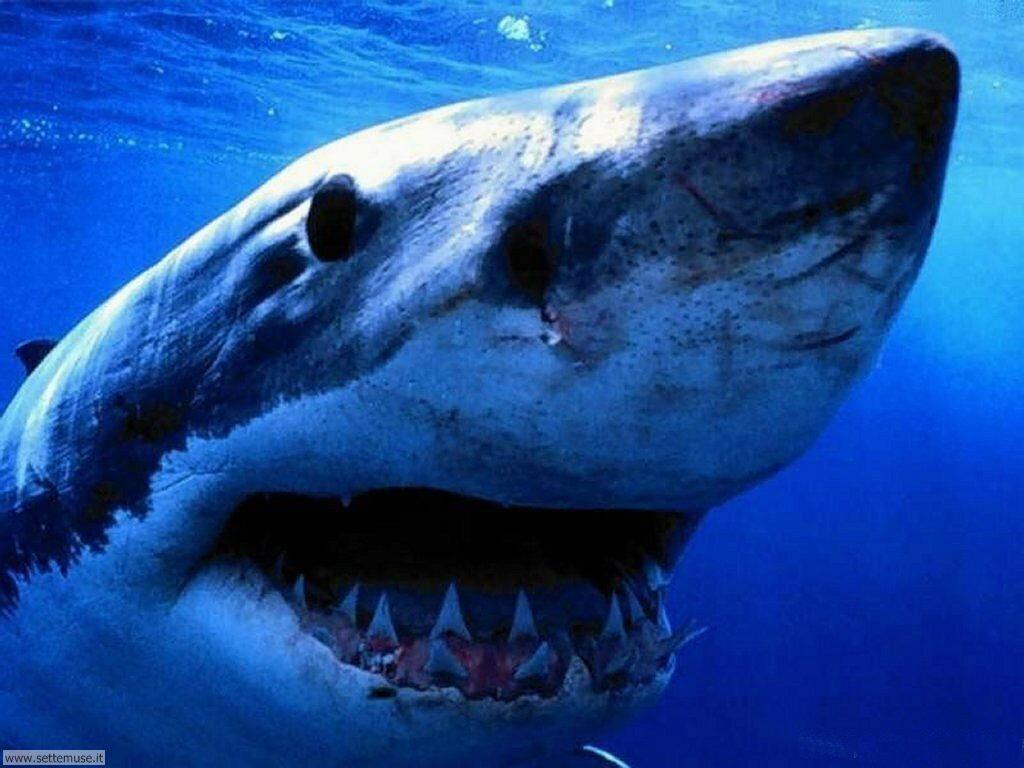 squali 2