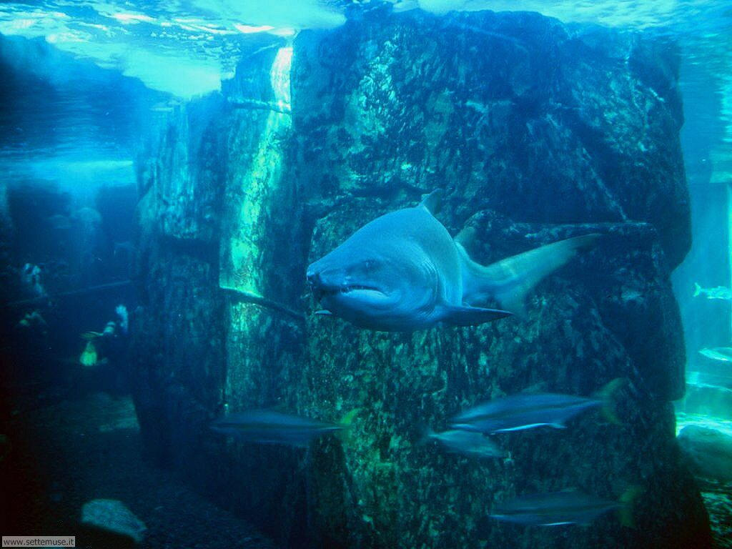 squali 5