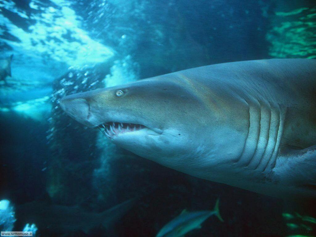 squali 6