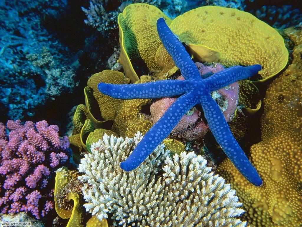 foto di stelle marine per sfondi