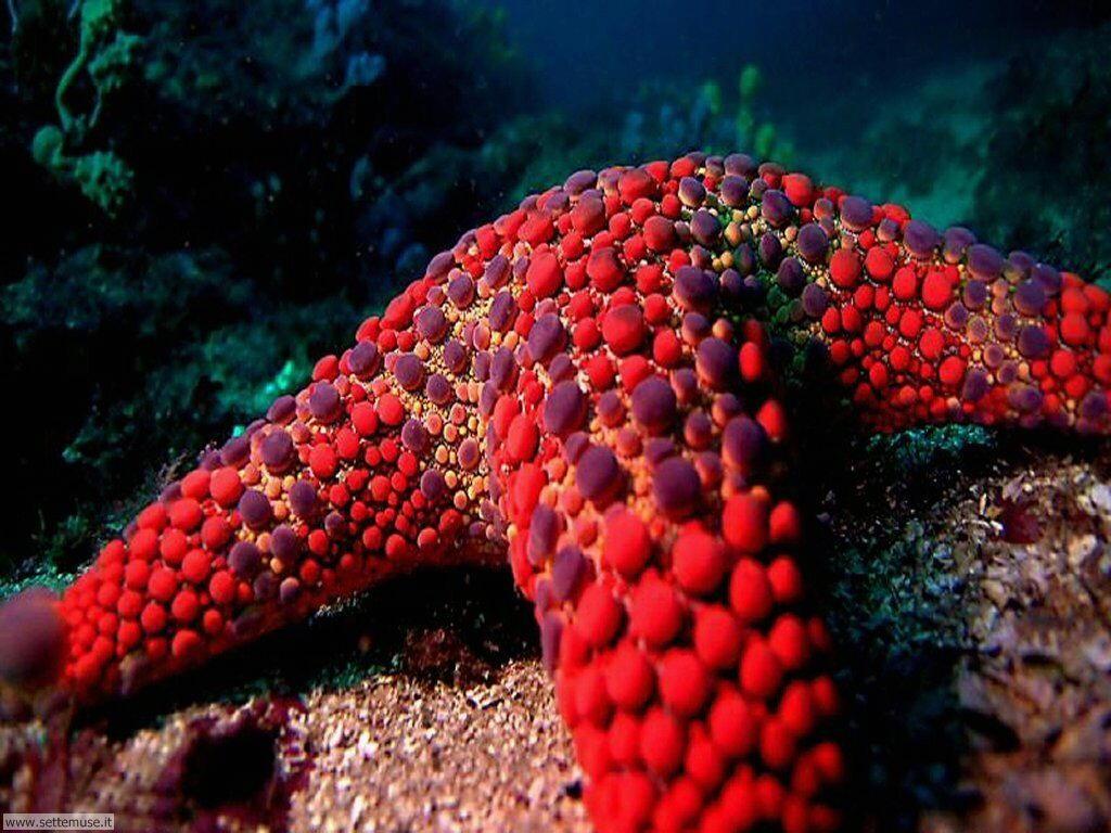 Foto stelle marine per sfondi pc for Sfondi pesci tropicali