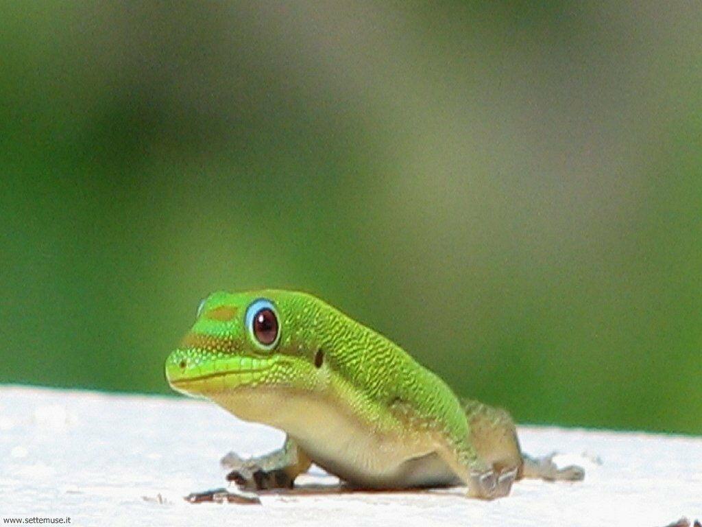 Foto di Iguana 002