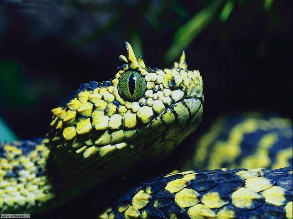 foto di serpenti per sfondi