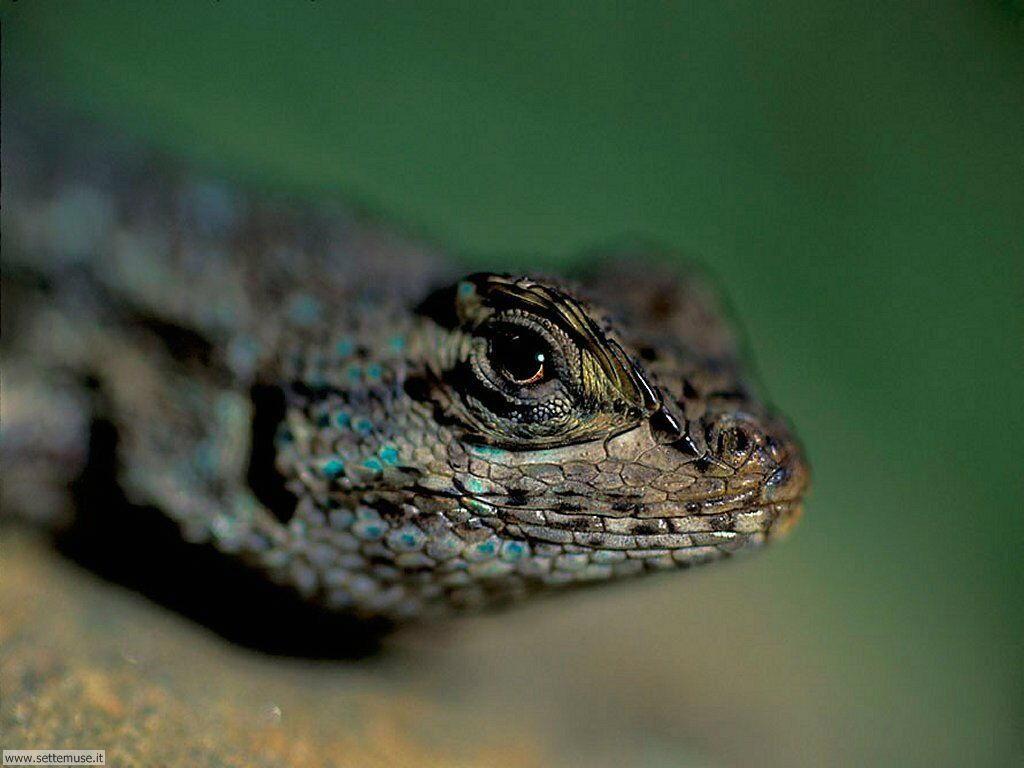 Foto di Serpenti 005