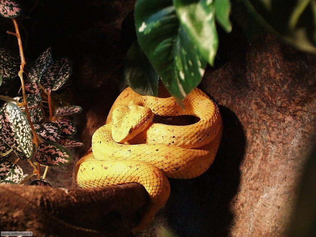 Foto di Serpenti 015