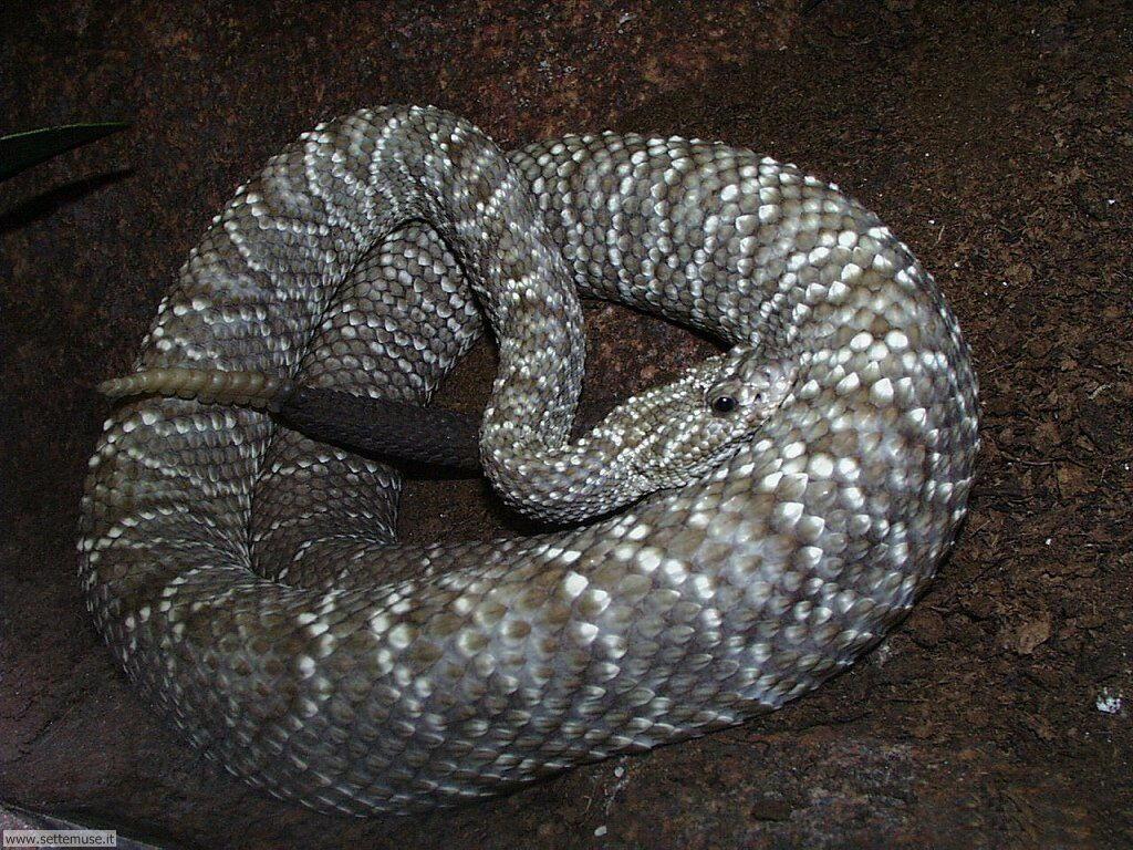 Foto di Serpenti 017