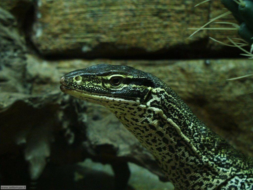 Foto di Serpenti 023