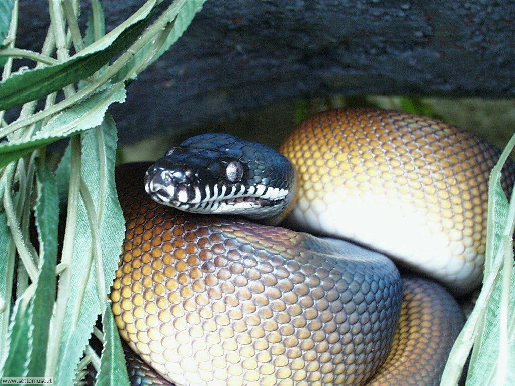 Foto di Serpenti 027