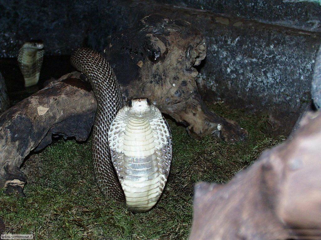 Foto di Serpenti 036