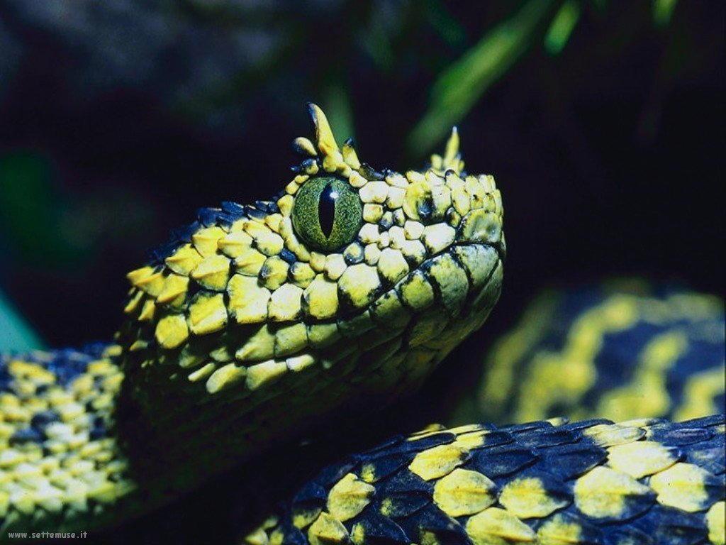 Foto di Serpenti 056