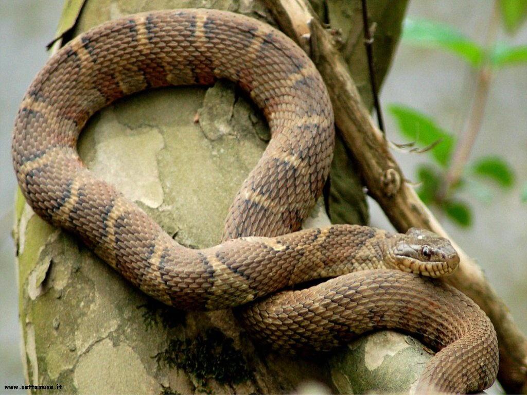 Foto di Serpenti 060