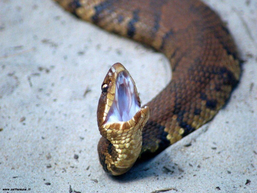 Foto di Serpenti 062