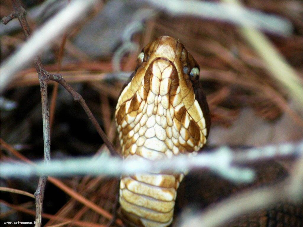 Foto di Serpenti 067