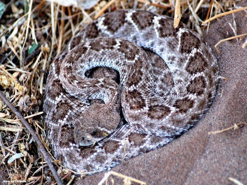 Foto di Serpenti 069