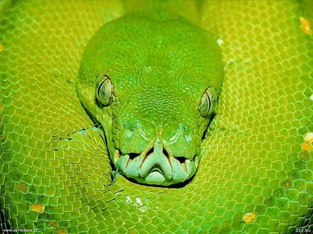 Foto di Serpenti 086