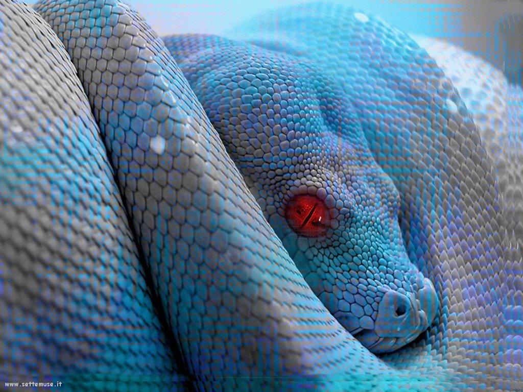 Foto di Serpenti 087