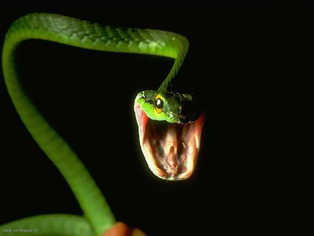Foto di Serpenti 088