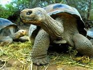 Foto sfondi testuggini e tartarughe