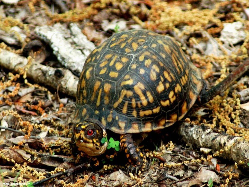 foto di tartarughe per sfondi