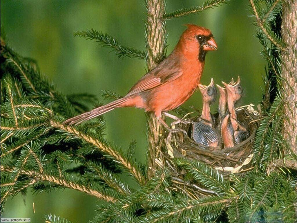 Foto di Uccelli nidiacei 009