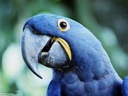 Foto sfondi pappagalli