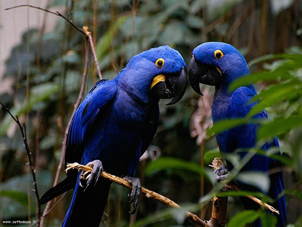 foto di pappagalli per sfondi