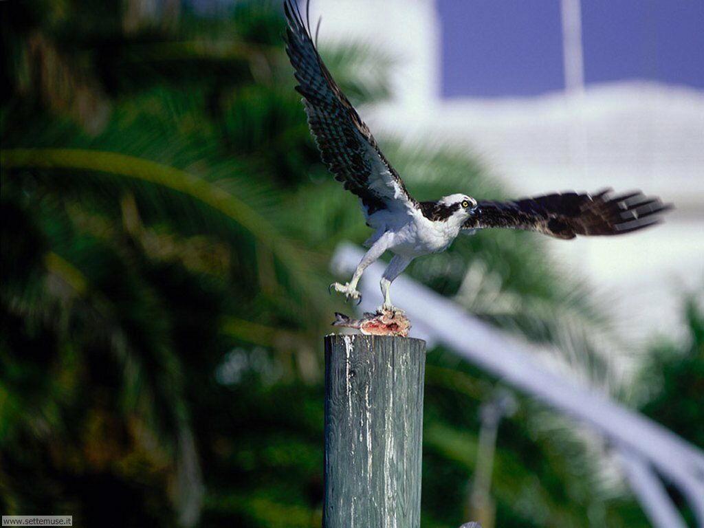Foto di Uccelli vari 002