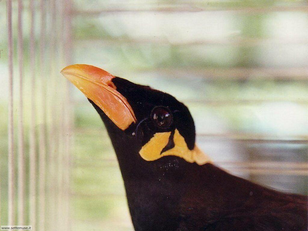 Foto di Uccelli vari 003