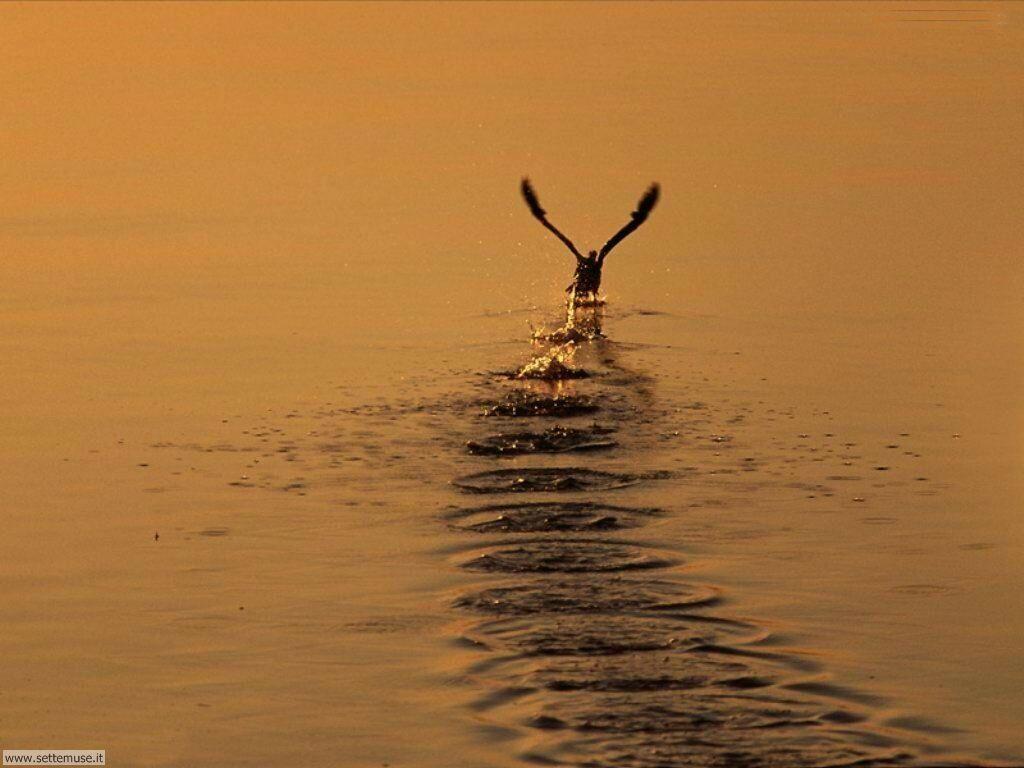 Foto di Uccelli vari 005