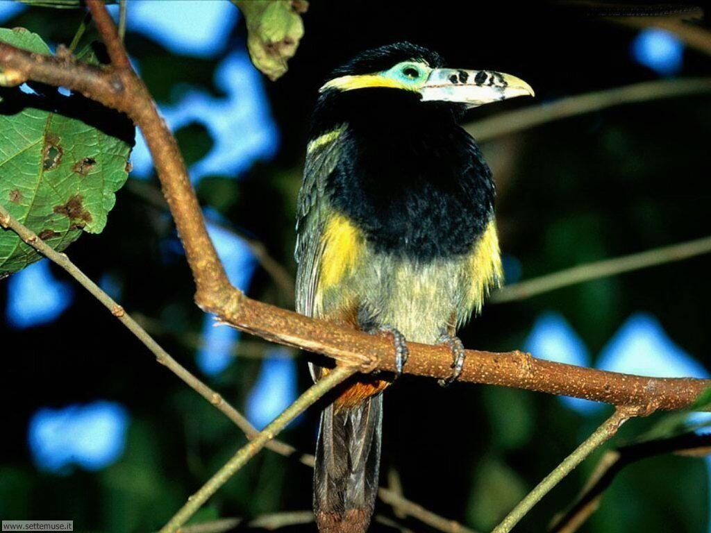 Foto di Uccelli vari 006