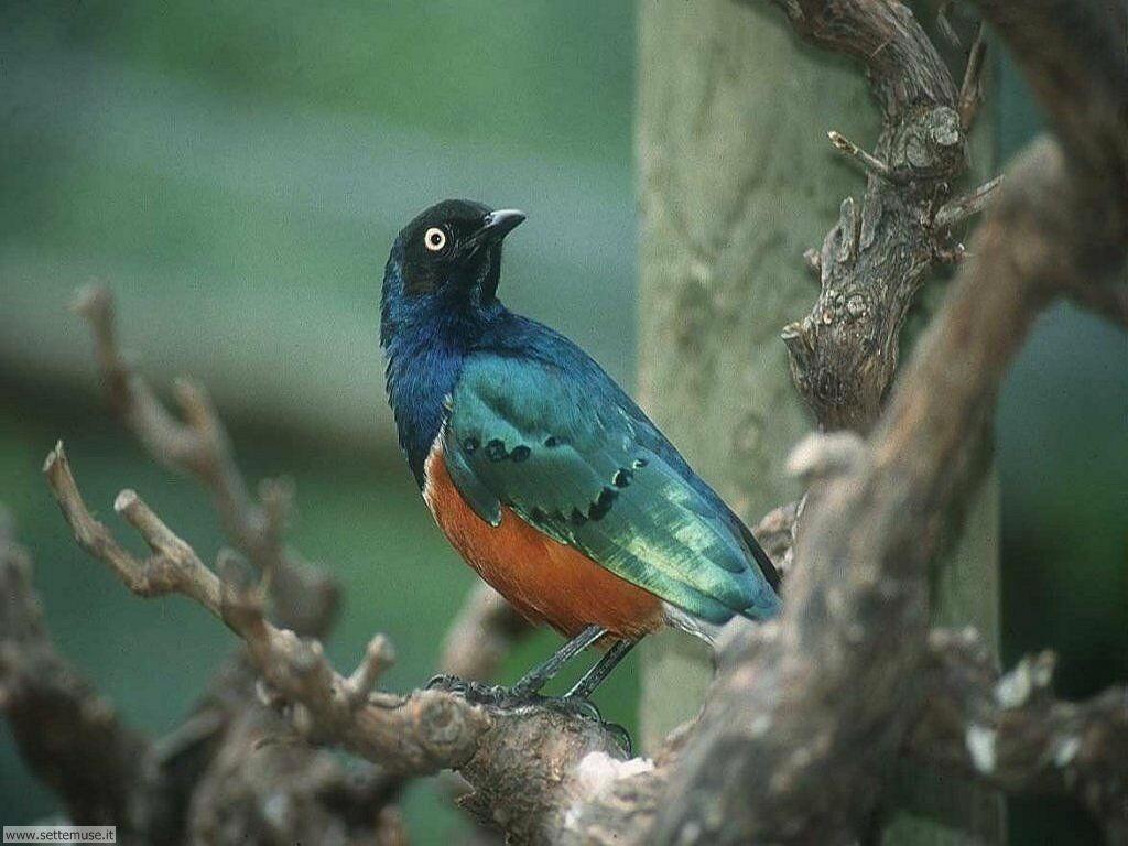 Foto di Uccelli vari 007