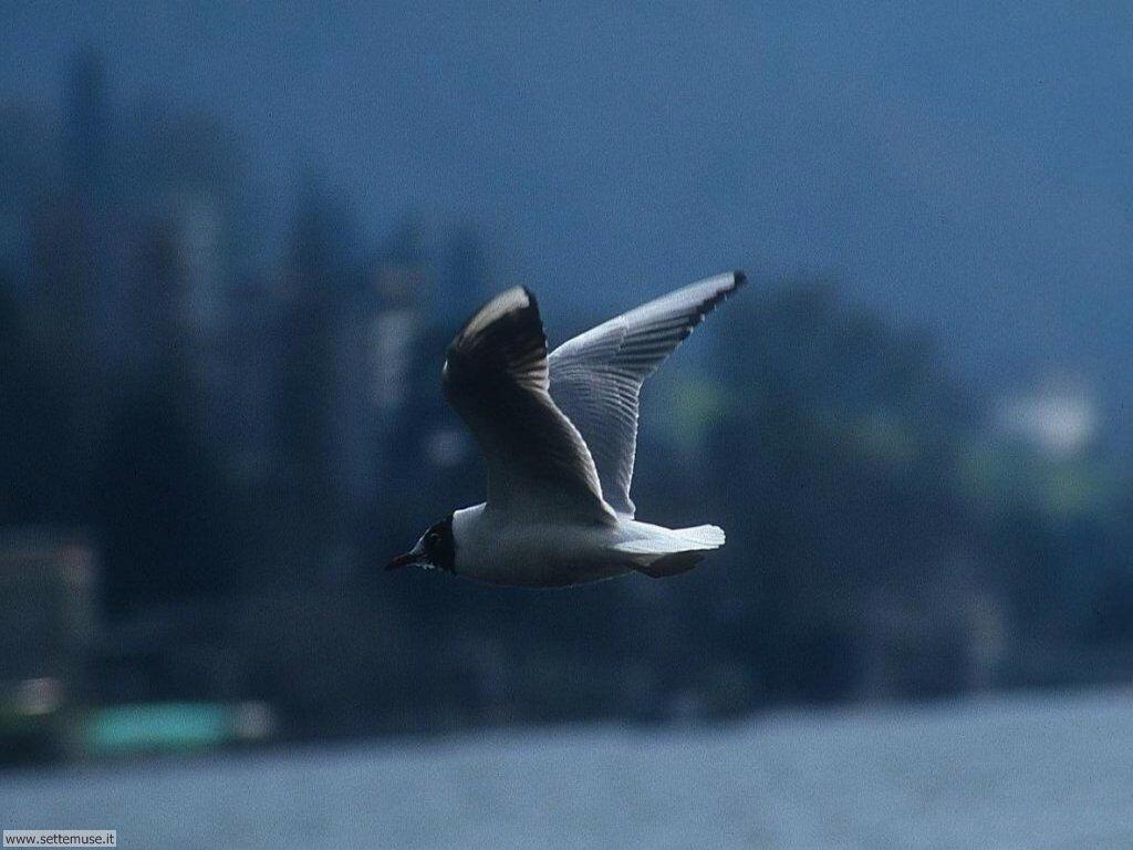 Foto di Uccelli vari 008