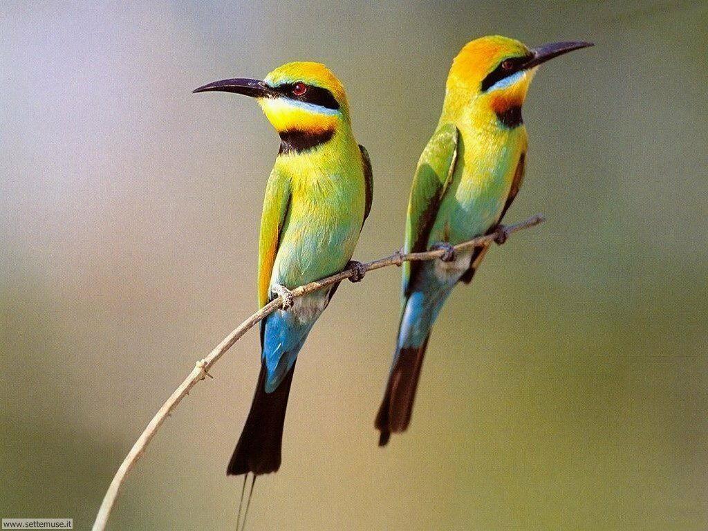 Foto di Uccelli vari 010