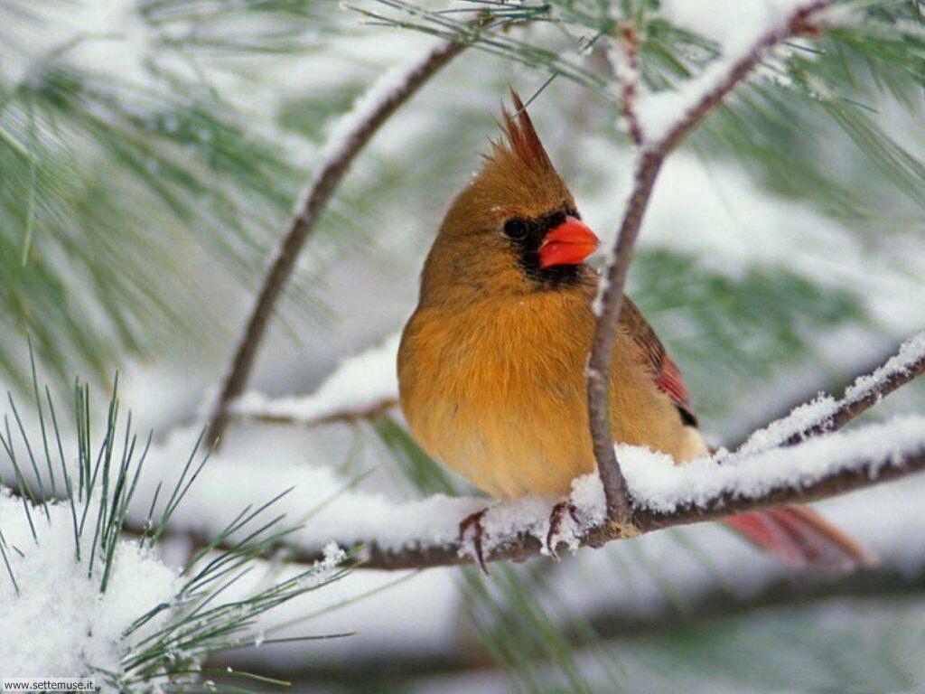 Foto di Uccelli vari 011