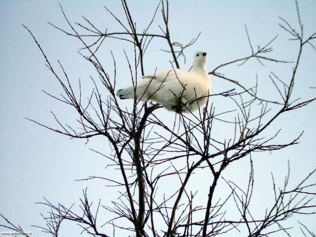 Foto di Uccelli vari 014