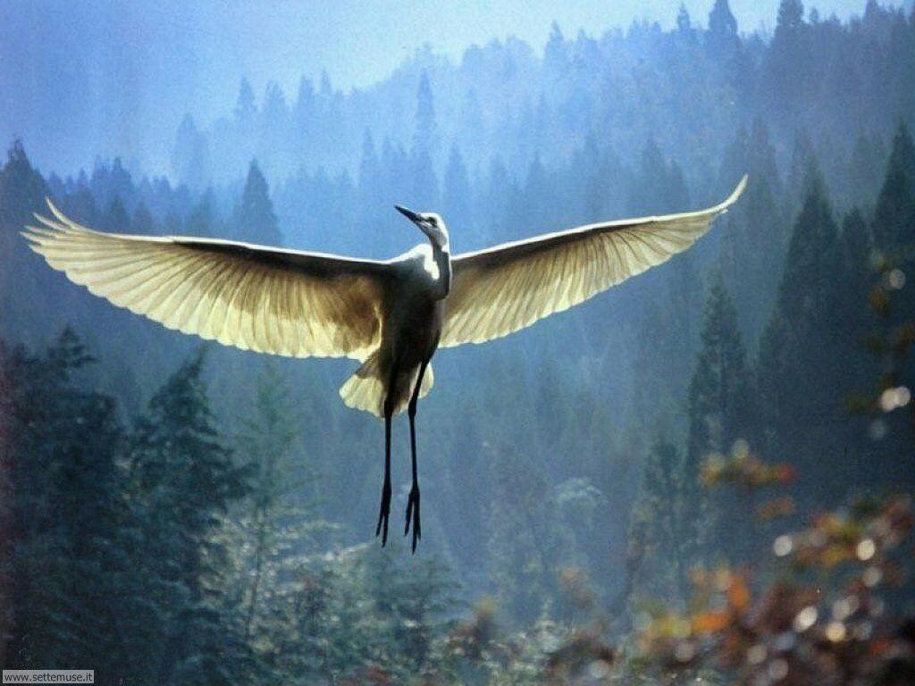 Foto di Uccelli vari 016