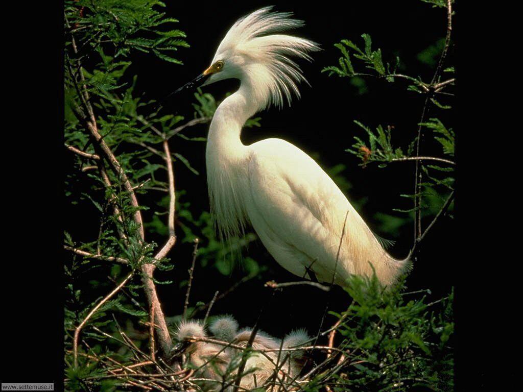Foto di Uccelli vari 019