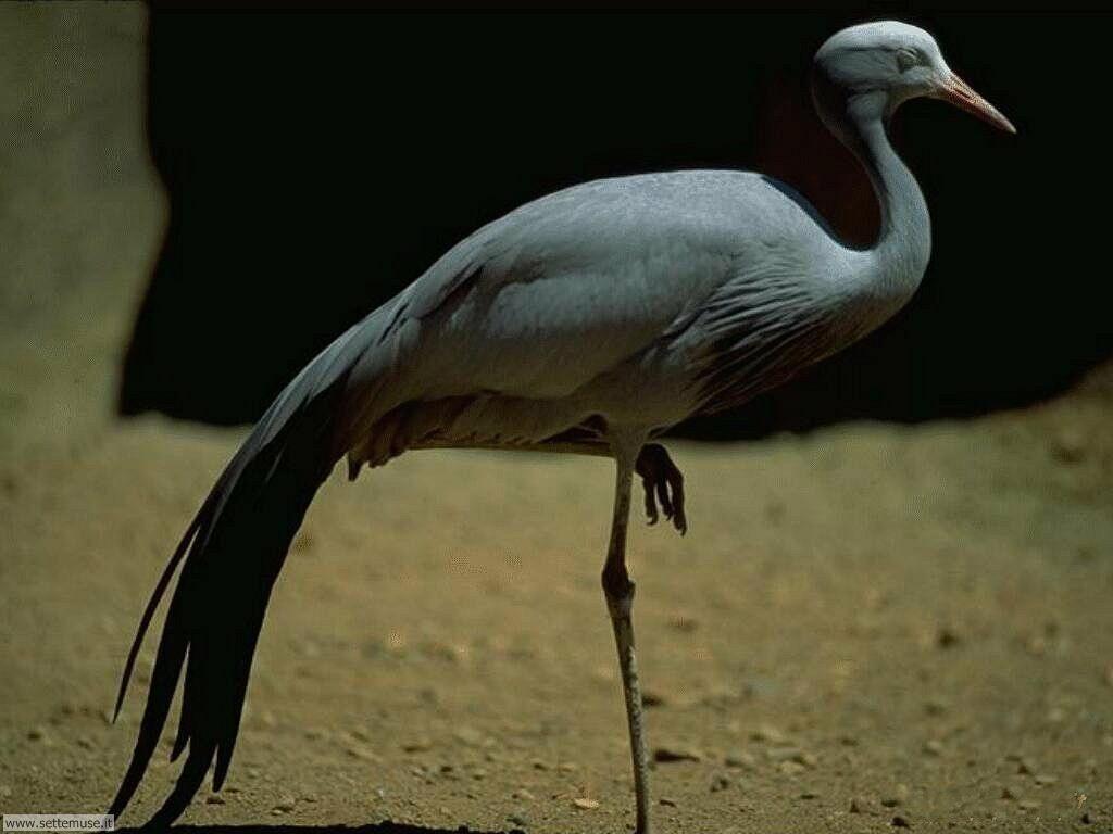 Foto di Uccelli vari 020