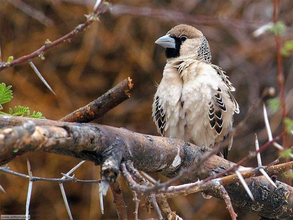 Foto di Uccelli vari 021