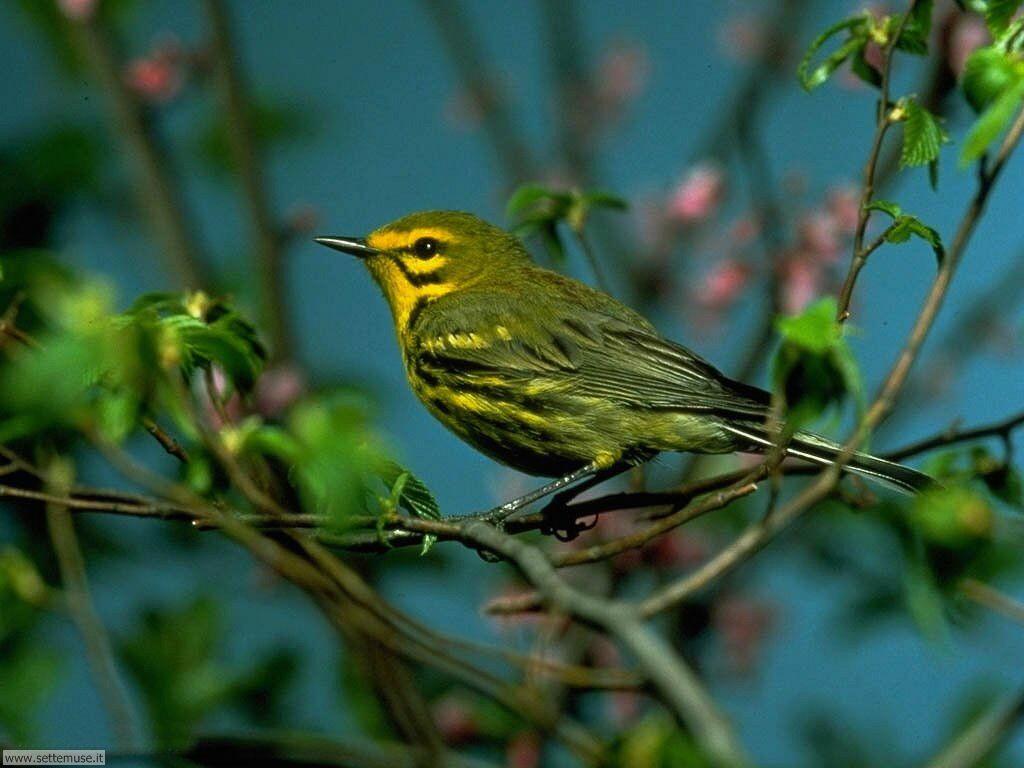 Foto di Uccelli vari 022
