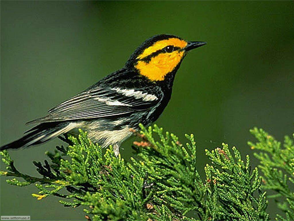 Foto di Uccelli vari 023