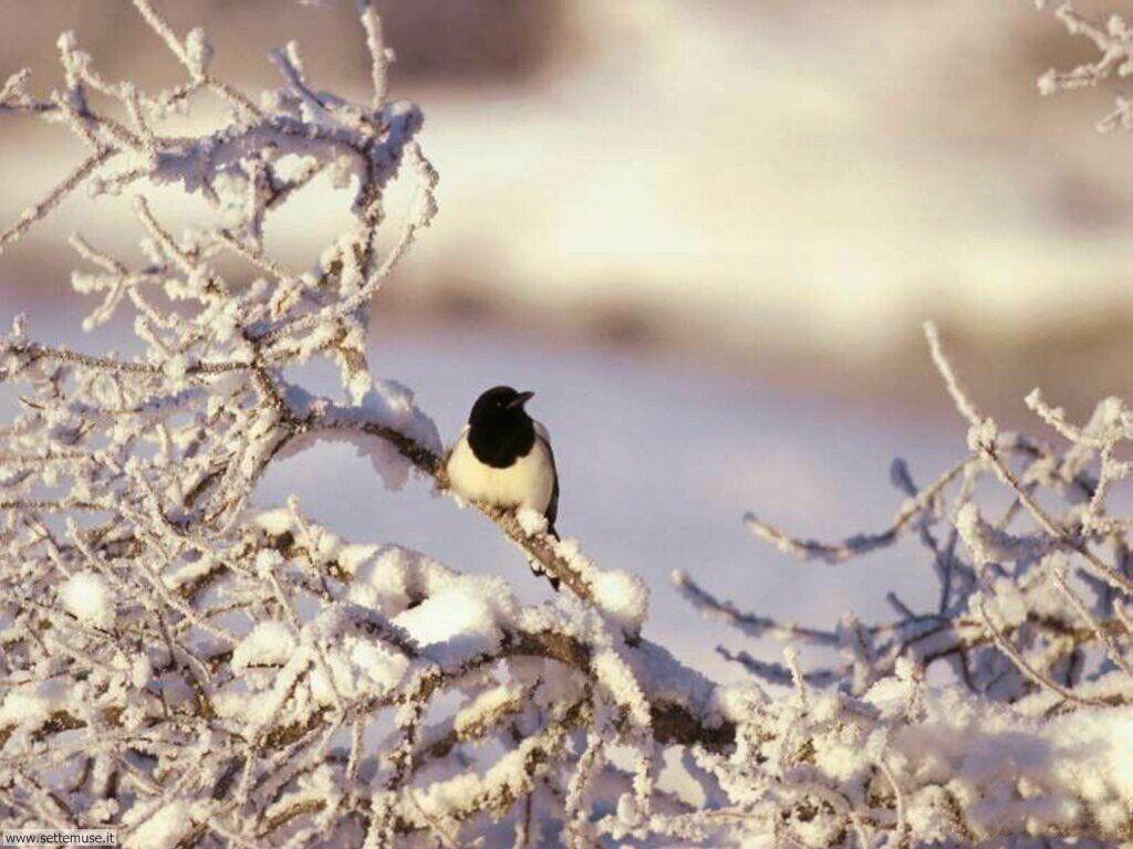 Foto di Uccelli vari 024
