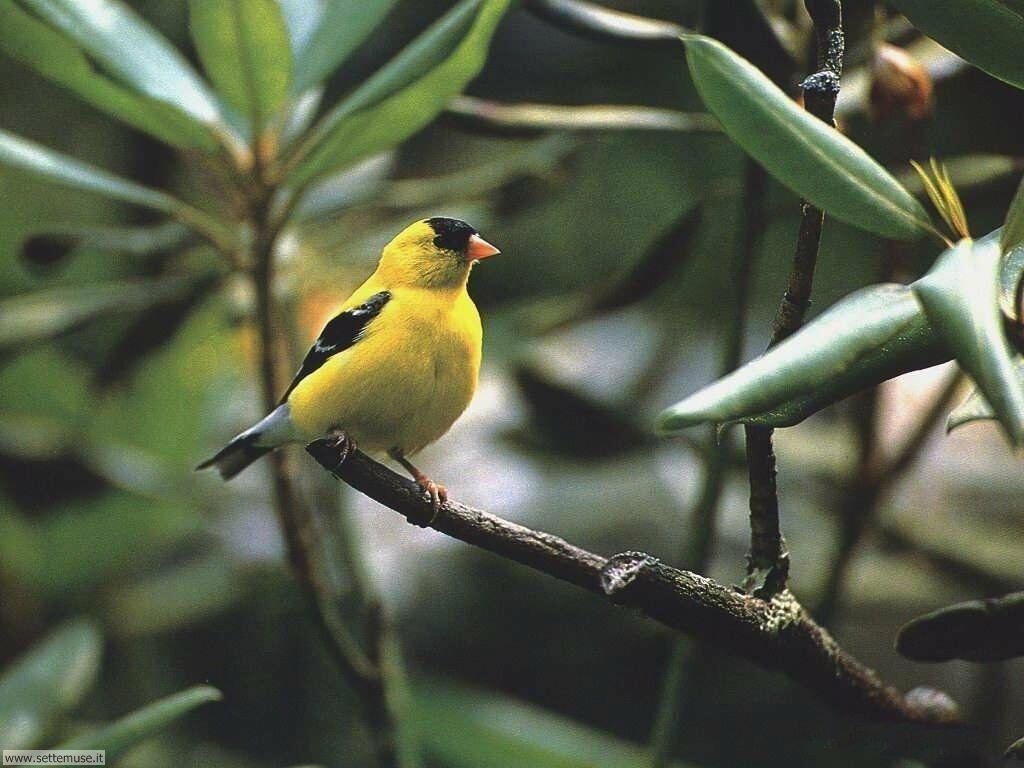 Foto di Uccelli vari 025