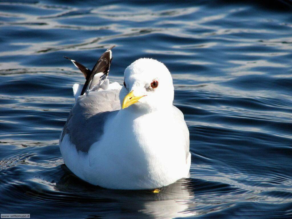 Foto di Uccelli vari 026