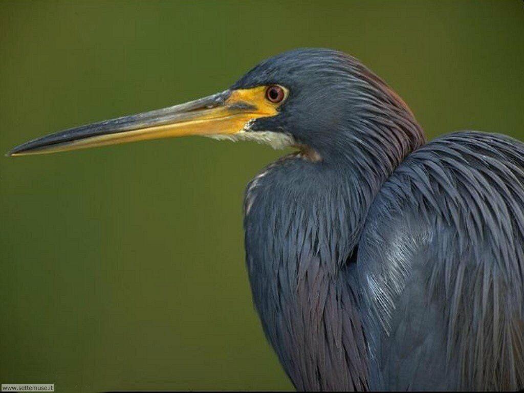 Foto di Uccelli vari 027
