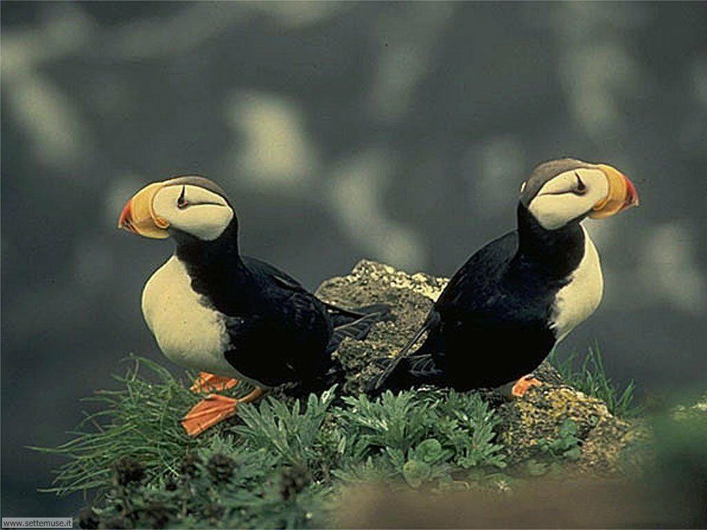 Foto di Uccelli vari 028