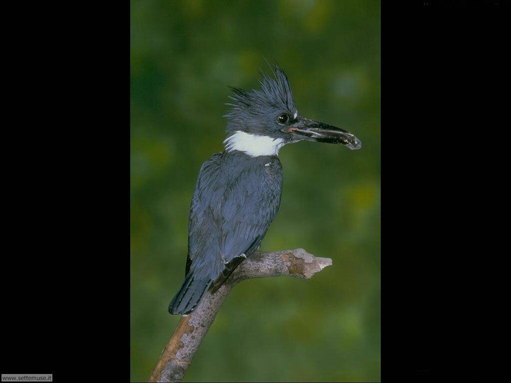 Foto di Uccelli vari 029