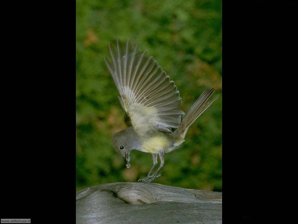 Foto di Uccelli vari 031