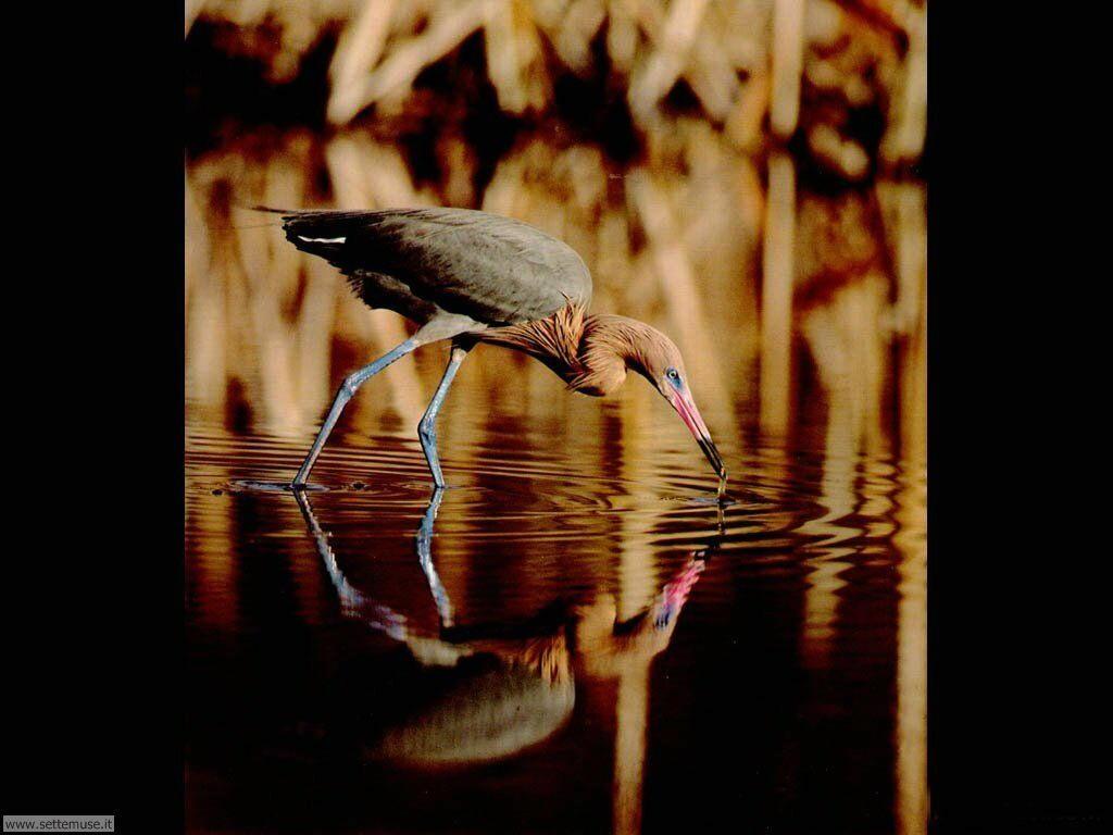 Foto di Uccelli vari 032